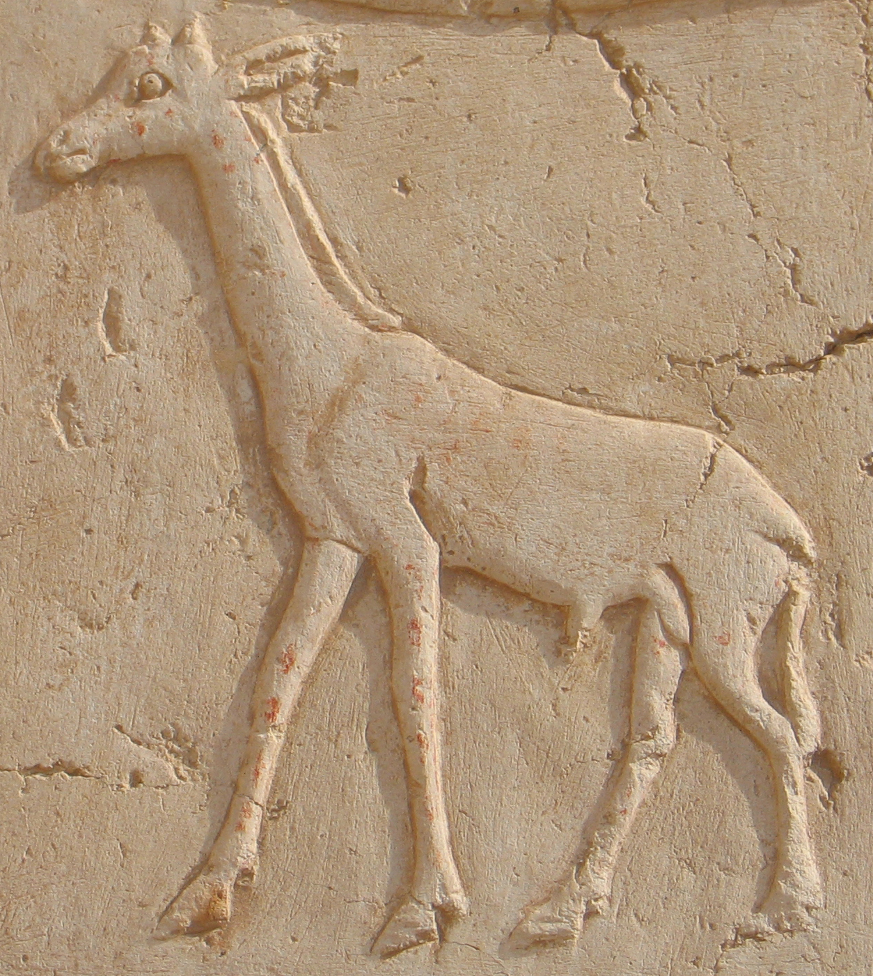 A hieroglyph of a giraffe carved on the northern wall. Photo J. Iwaszczuk